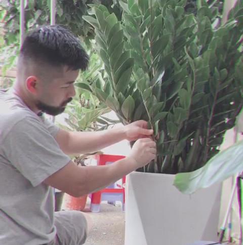 座地大型植物造型