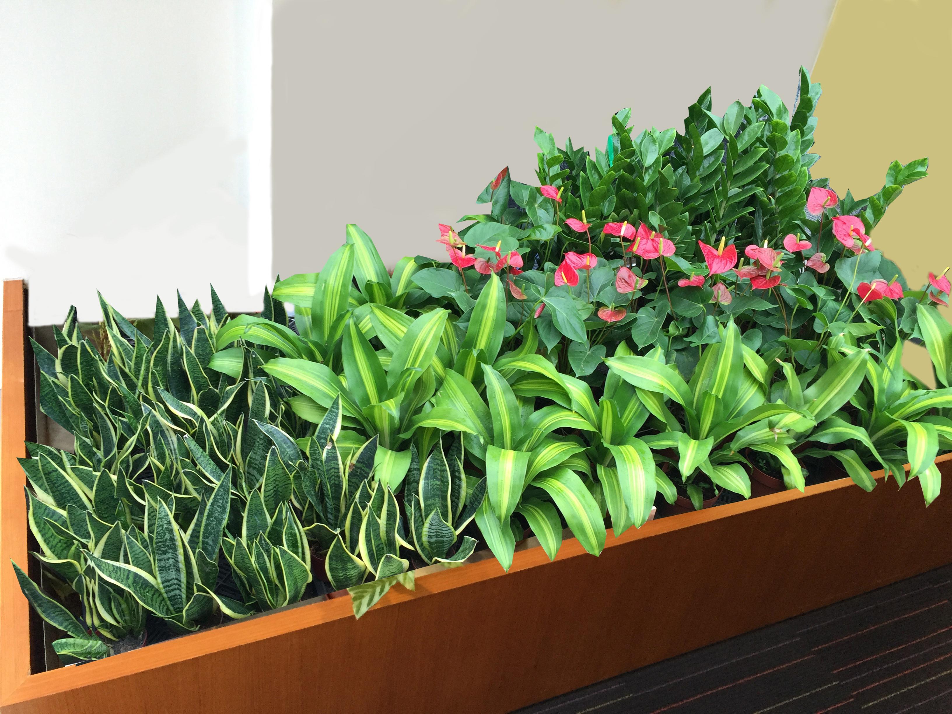 辦公室盆栽樣板