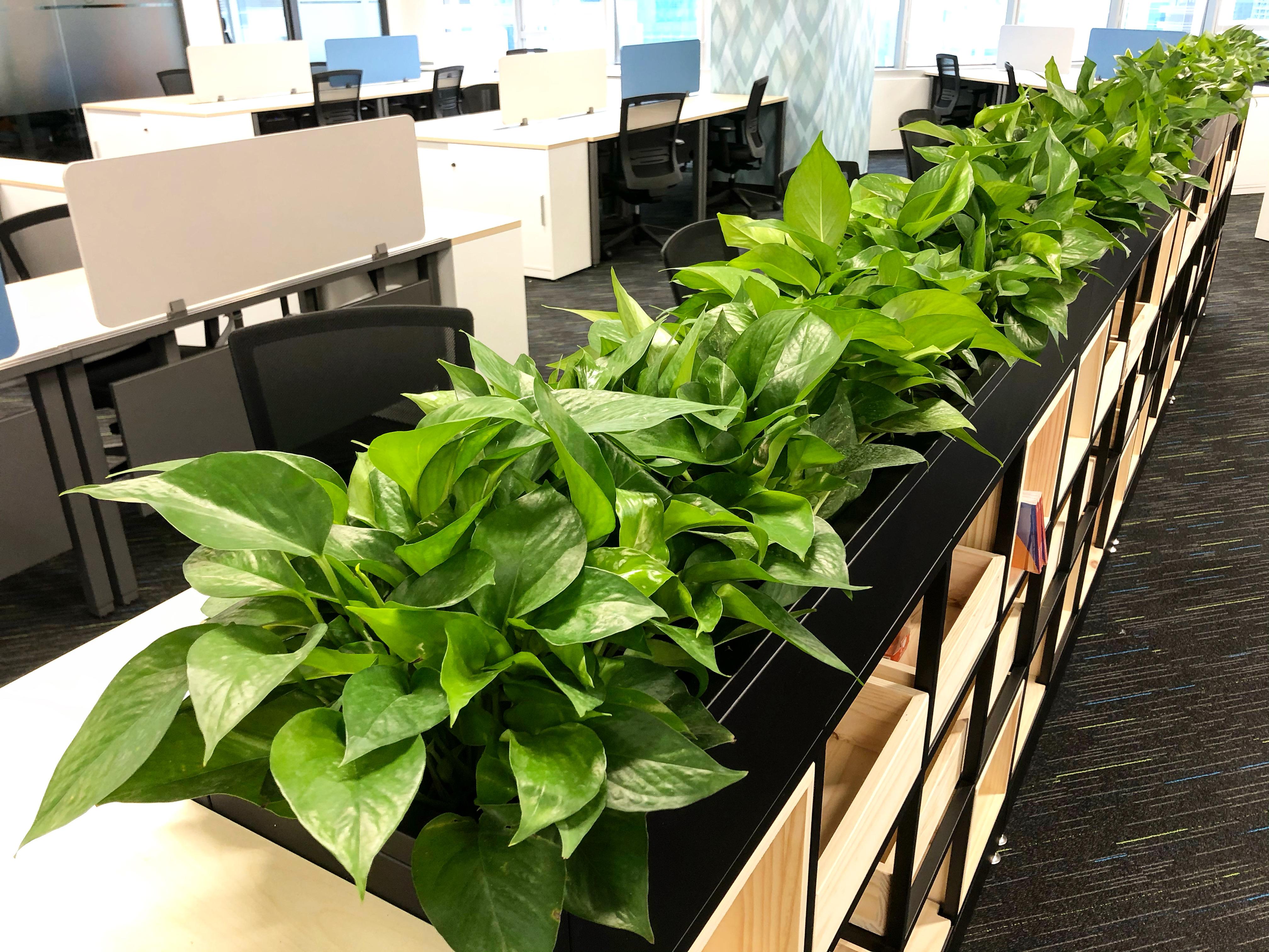 辦公室植物