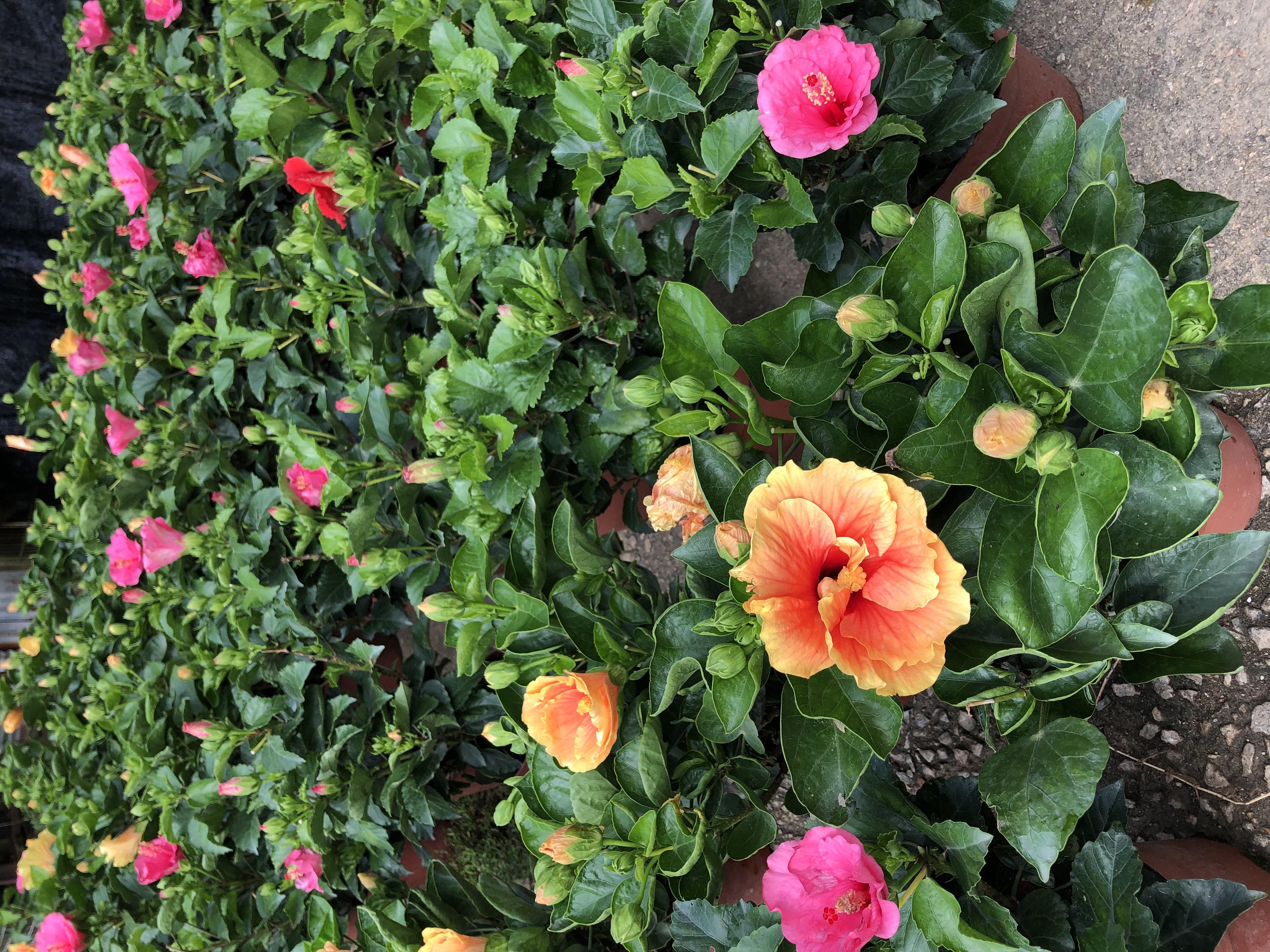 購買小型植物