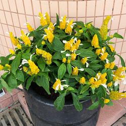 花盆換植物