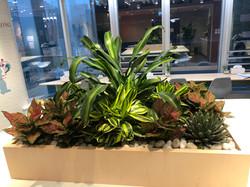 辦公室種植