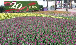 香港花卉展覽