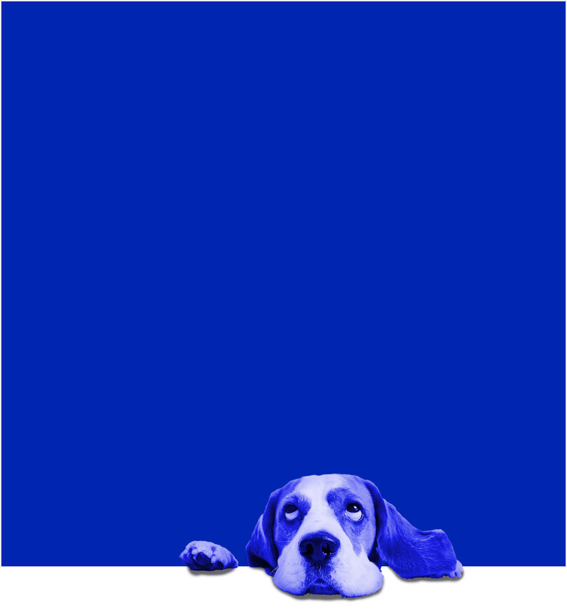 DogBox.png