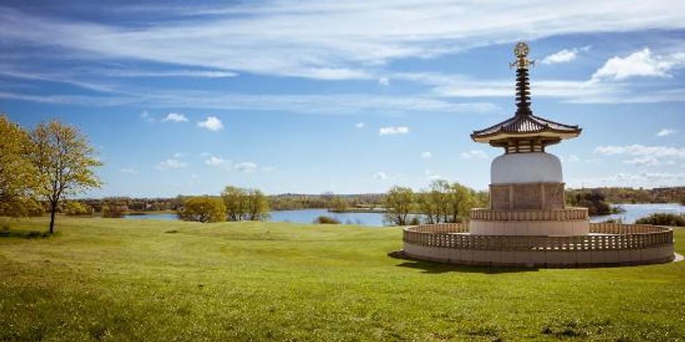 COMMUNITY YOGA | Yoga in the Park