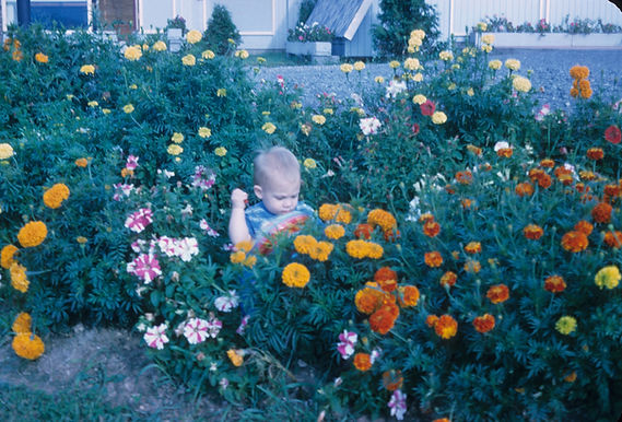 David Fitz-Gerald Deadheading Marigolds at Paleface Dude Ranch