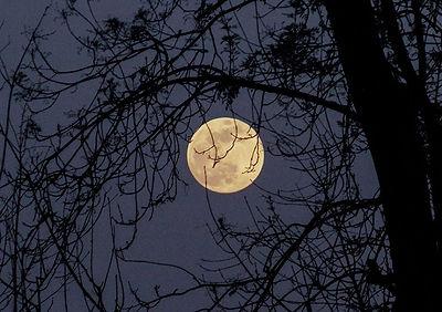Full moon2.jpg