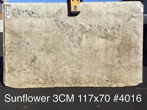 Sunflower #4016