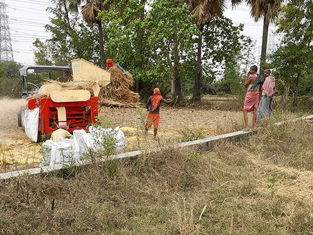 1000 kg hvede høstet