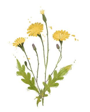 yellow-wild-flower.jpg