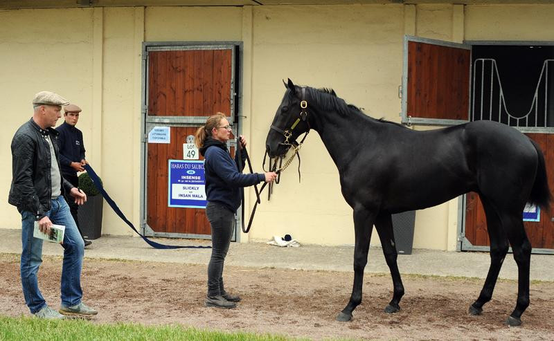 Assessing the lovely Never On Sunday colt at the Osarus Breeze-up Sale