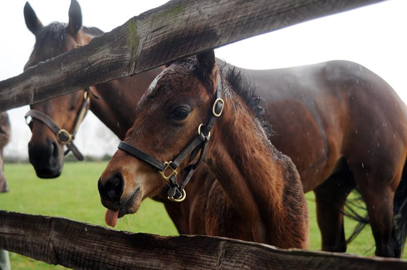 Tin Horse colt ex Plebeya sm.jpg