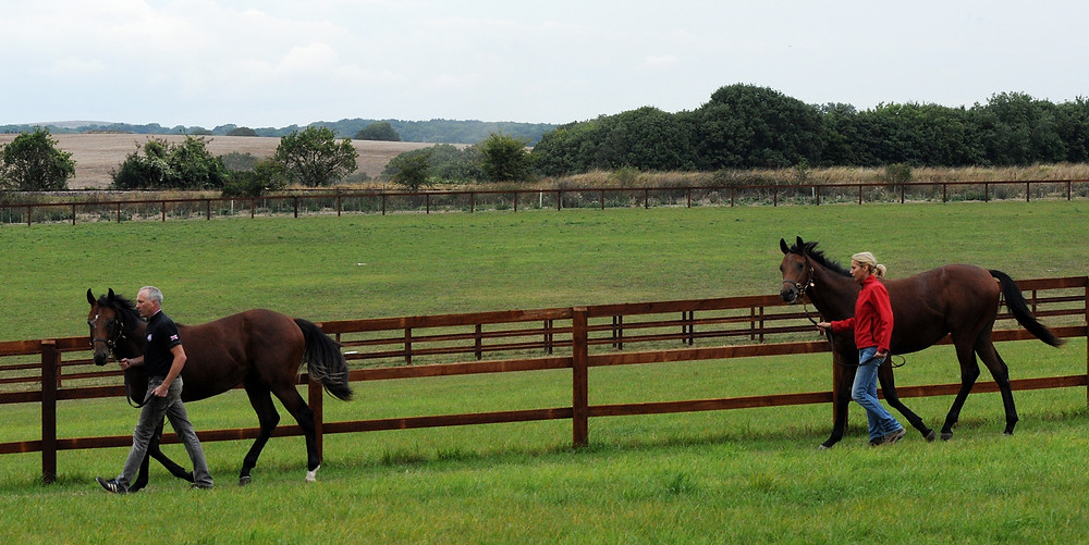 Yearlings at Clairemont.jpg