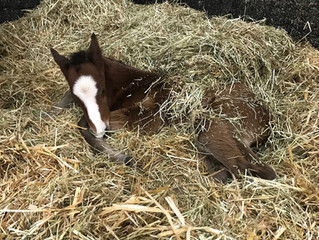 Five foals and plenty of winners