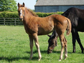 Just one more foal to come!