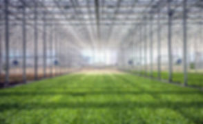 Bright-Farms-OH-greenhouse.jpg