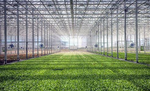 Bright-Farms-OH-greenhouse.jpg