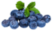 blueberries-115283400596brhpxiujs.png