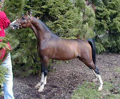 MichiganWild Horse.jpg