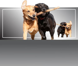 Dog Tired Pet Services