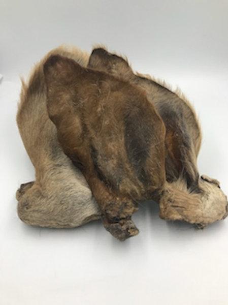 Hairy Goat Ear