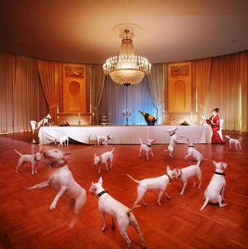 Le dìner de chien au Palace de Lausanne