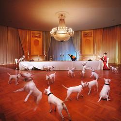 «Le dîner de chien»