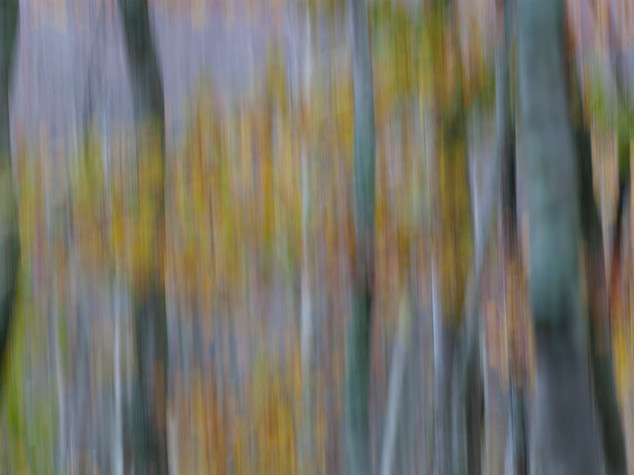TREE  MOVE