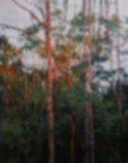Birches at Sunset.JPG