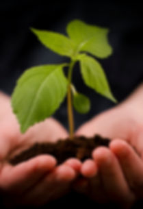 hand-holding-plant-ftr.jpg