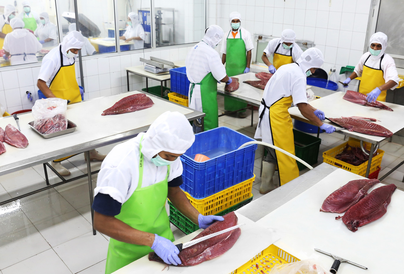 Yellowfin Tuna Processing (Trimming)