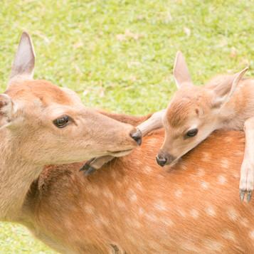 deer (6).jpg