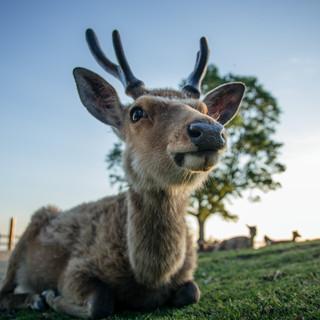 deer-summer (1).jpg
