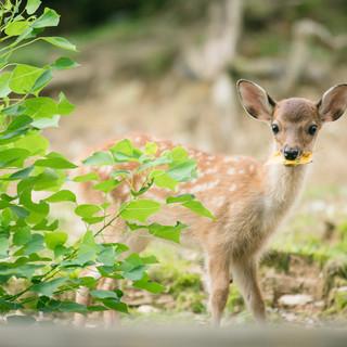 deer-summer (9).jpg