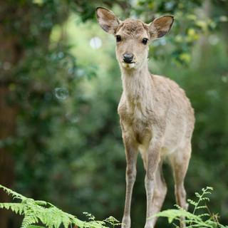 deer (66).jpg