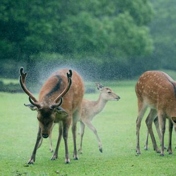 deer (8).jpg