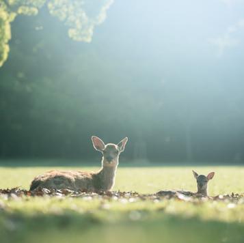 deer-summer (15).jpg