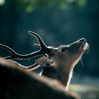 deer-summer (3).jpg