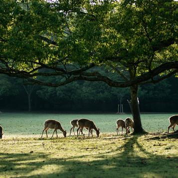 deer-summer (12).jpg