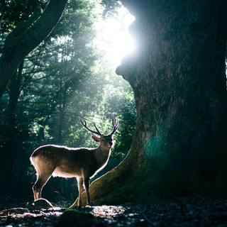 deer (12).jpg