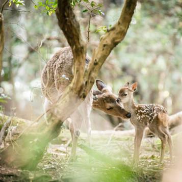 deer-summer (10).jpg