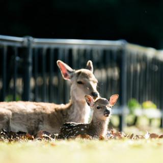 deer-summer (14).jpg
