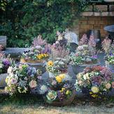 flower-class (3).jpg