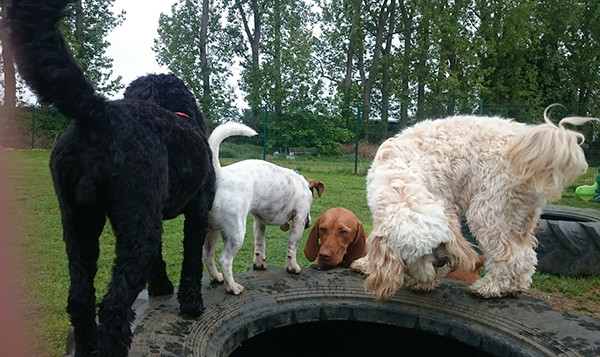 Oakington Dog Day Care, Outdoor play time