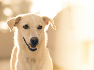 Why is my Dog's Dental Health So Important?
