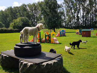Recent Improvements to our Dog Day Care Facilities