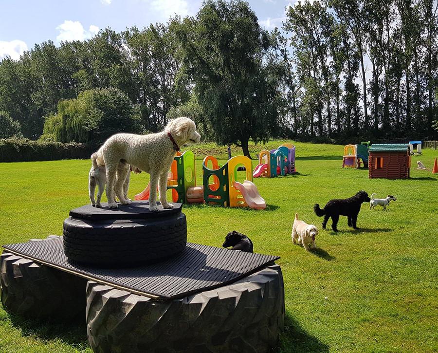Dog Day Care Facilities in Cambridgeshire
