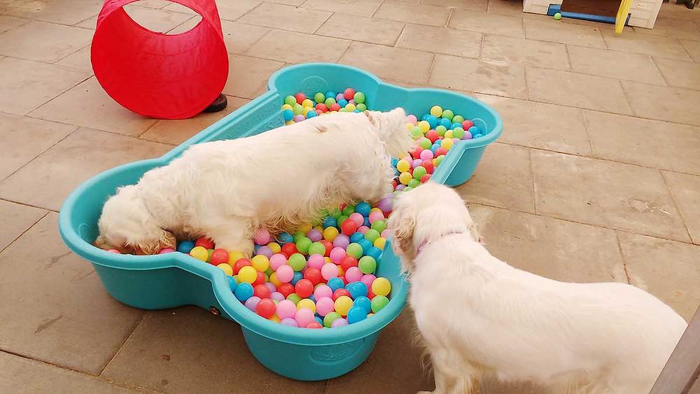 Oakington Dog Daycare Cambridgeshire