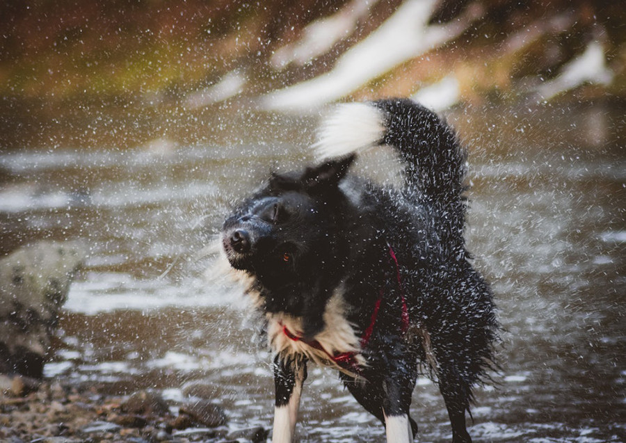 Keeping Dogs Cool in Heatwaves