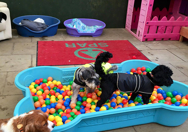 Oakington Dog Day Care Indoor Ball Pool